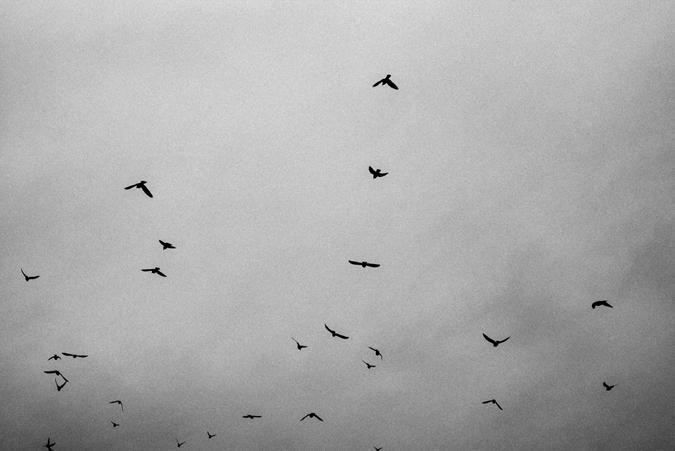 Fotograf_Nicki_Twang_birds