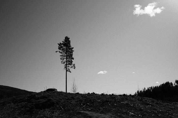 fotograf_nicki_twang_fjellet_feature